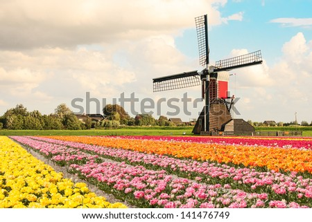 A typical Dutch composition of a mill with red, orange, pink and yellow flowering Tulip fields in the foreground against a Dutch cloudy sky - stock photo