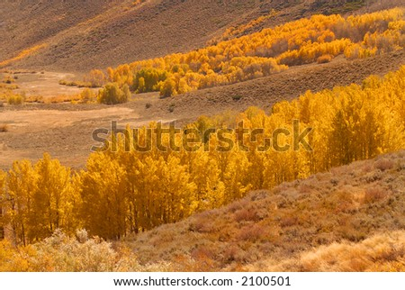 A valley filled with colorful golden aspen trees - stock photo