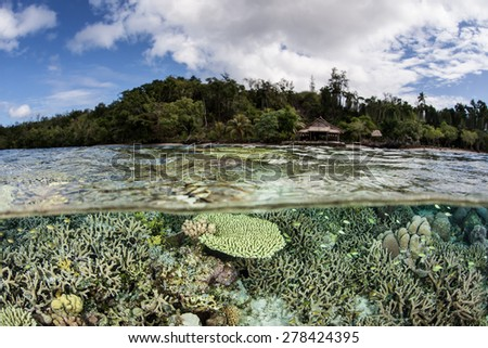 A variety of corals grow in shallow water in the Solomon Islands. This is the easternmost part of the Coral Triangle and harbors extraordinary marine biodiversity. - stock photo