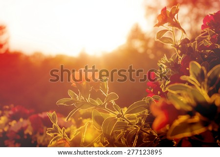 A Variety of Flowers Blooming in Pots on an Urban Balcony at Sunset - stock photo
