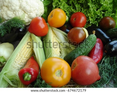 A variety of fresh organic summer vegetables