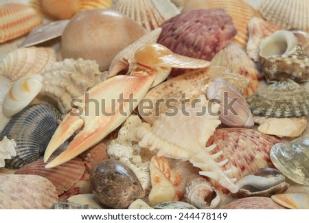 A Variety of Sea Shells  and Sea Life on the Beach - stock photo