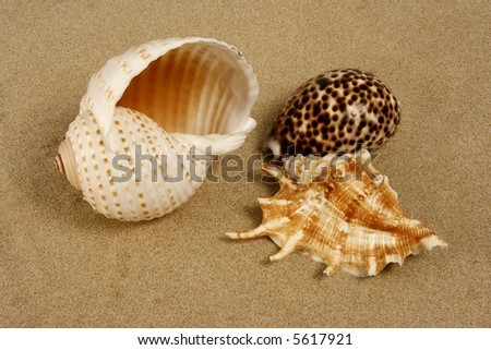 A variety of seashells on the beach sand - stock photo