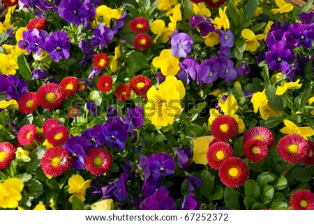 a variety of spring flowers filling the entire picture - stock photo