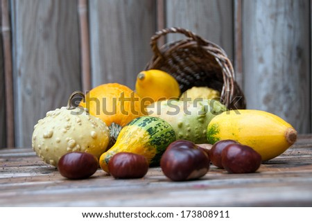 A variety of Squash vegetables spilling out of a rustic wooden basket - stock photo