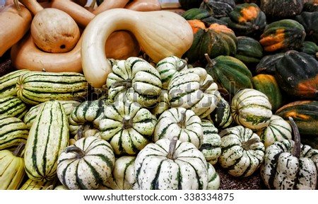 A variety of winter squash and gourds. - stock photo