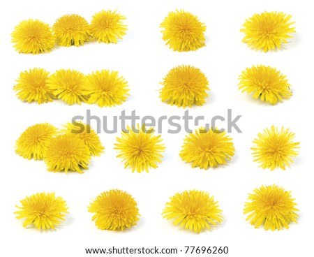 A variety of yellow dandelion (taraxacum officinale) isolated on white background. - stock photo