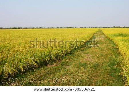 A vast prairie to freedom - stock photo