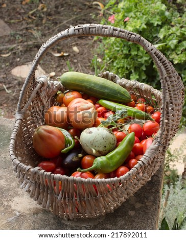 a vegetable basket in a garden