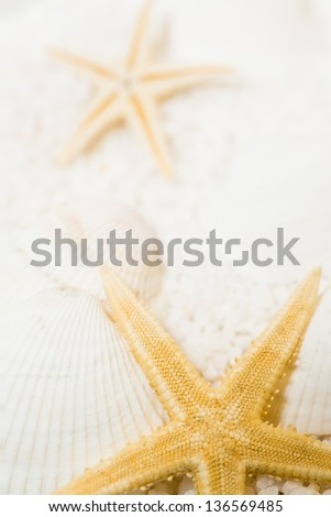 a vertical shot of starfish on shells and sand. macro shot in studio. focus on front starfish