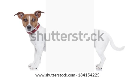 a very long white jack russel terrier with blank banner - stock photo