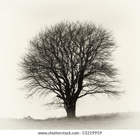 A very sharp and detailed photo of a lonely tree on a field - stock photo