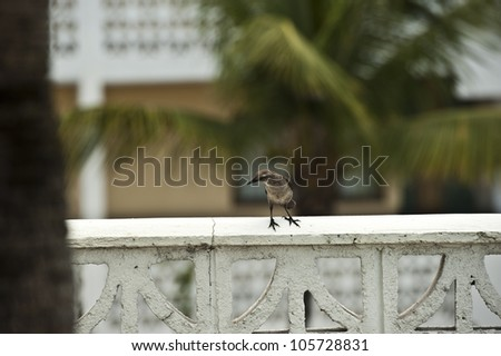 A very small sized bird resting on a stone banister. - stock photo