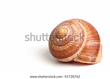 A very tasty snails on the white