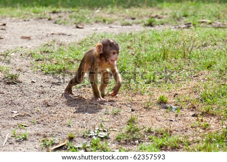 a very young baby monkey in the nature