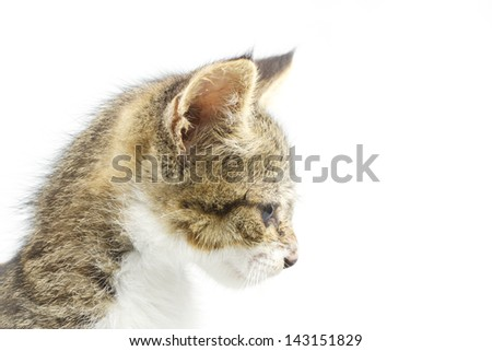 A very young cat isolated over white background - stock photo