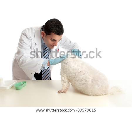 A vet attends to and inspects a pet  dog - stock photo