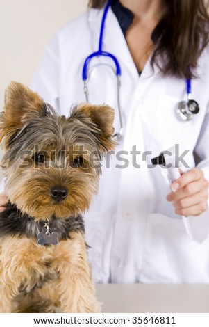 A veterinarian giving a dog an examination - stock photo