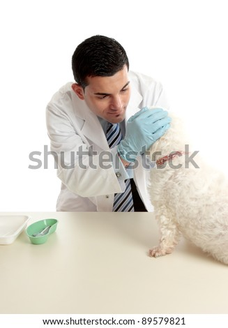 A veterinarian inspects a dogs eyes for signs of allergies or infection.  White background. - stock photo