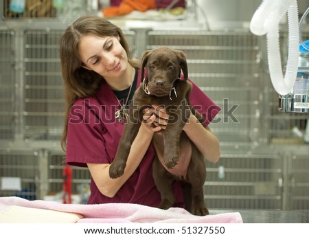 a veterinary assistant hold a young patient