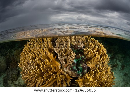 A vibrant and healthy coral colony and giant clam (Tridacna sp.) grows near a set of limestone islands in Raja Ampat, Indonesia.  This is possibly the most diverse area in the world for marine life. - stock photo