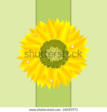 A vibrant detailed sunflower caressed with dewdrops graces a bright green background. Make earth day or mothers day gift cards out of this stunning image. - stock photo