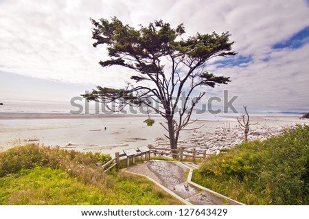 A view from ruby beach - stock photo