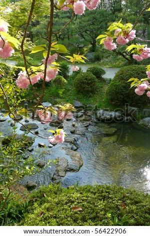 A view of a beautiful Japanese garden creek through the hanging branches of a cherry tree - stock photo