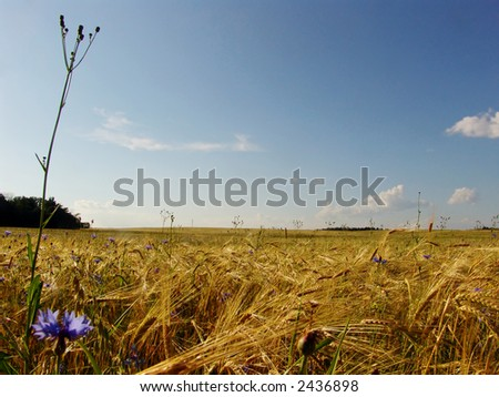 A view of a farmland landscape in late summer - stock photo