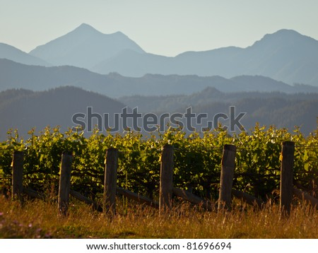 A view of a new zealand vineyard with misty mountains backdrop - stock photo