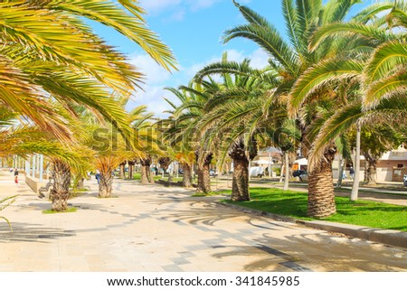 A view of a palms on a promanade in Alghero, Sardinia - stock photo