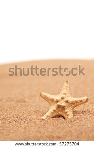 A view of a sea star on a sandy beach isolated on white background - stock photo