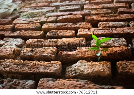 A view of a small, tender green plant or weed sprouting along an - stock photo