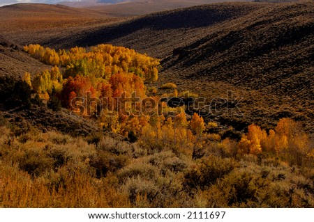 A view of a valley in Yosemite with Fall aspen Bloom - stock photo