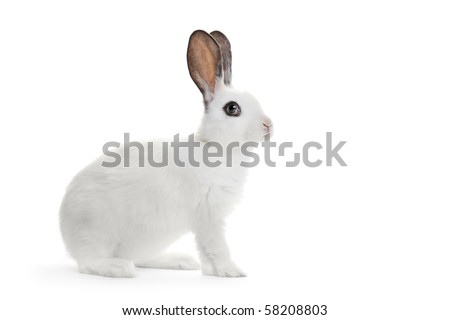 A view of a white rabbit isolated on white background - stock photo