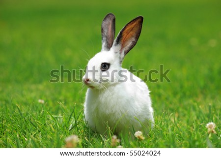 A view of a white rabbit on a green grass - stock photo