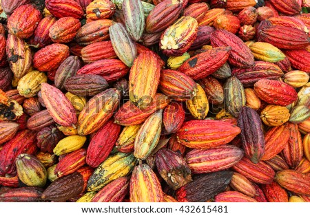 A view of collected cocoa pods in Huayhuantillo village near Tingo Maria in Peru, 2011 - stock photo
