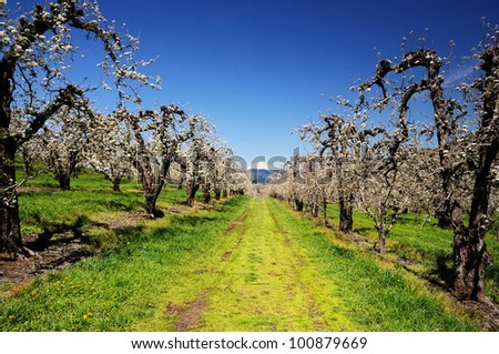 A view of orchards in Hood river - stock photo