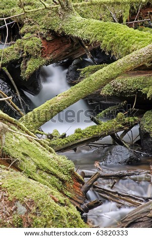 A view of rain forest with creek water flow. - stock photo