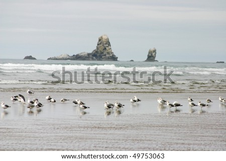 A view of seagull in cannon beach. - stock photo