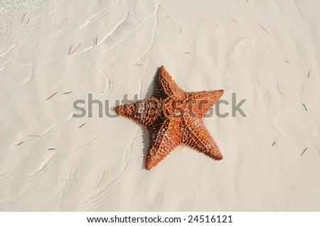 A view of starfish over sand texture on tropical beach - cuba