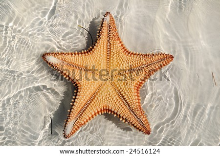 A view of starfish texture over water on tropical beach - cuba