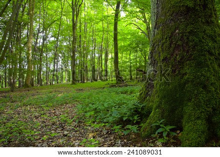A view of the deciduous forest by Beckingen, Saarland / Germany. - stock photo