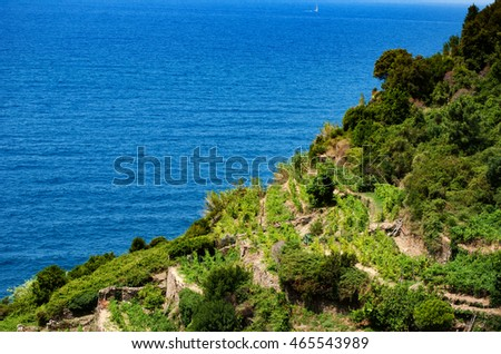 A view of the tiered vineyard cliff in Cinque Terre, Italy