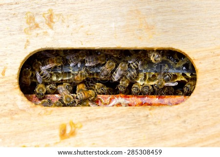 A view of the top of a hive box, filled with honey bees milling about, - stock photo