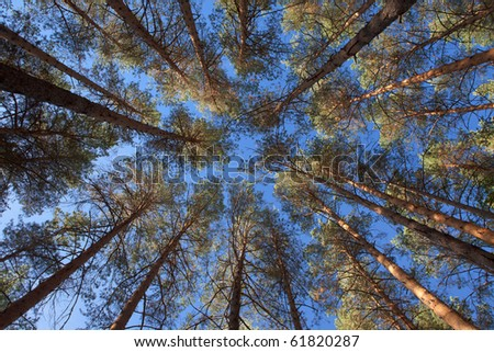 A view of tops of trees in autumn with the blue sky in the background - stock photo