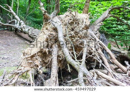A view of tree roots from an uprooted tree - stock photo