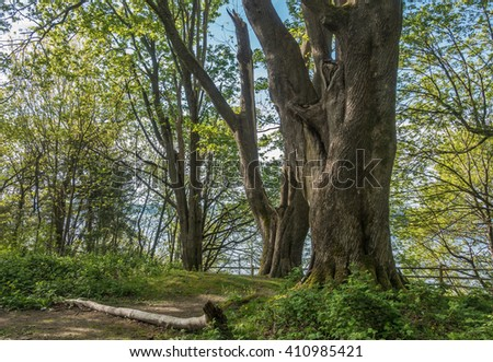 A view of trees at Dash Point State Park in Washington State.