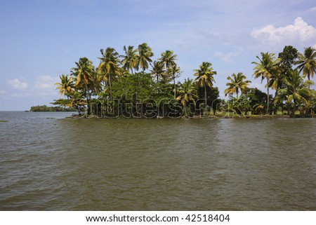 a view of tropical palms across the backwaters of kerala south india