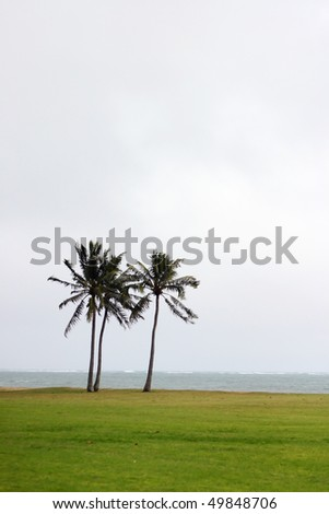 A view of two tropical coconuts tree in beach with sea background. - stock photo